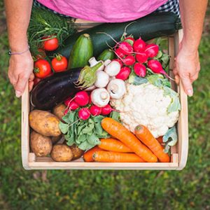 una de nuestras cestas de verdura ecologica de nuestra huerta de zaragoza