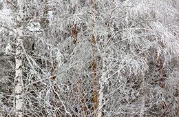 Temporada de invierno en la huerta de Zaragoza