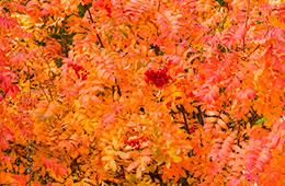 Temporada de otoño en la huerta de Zaragoza