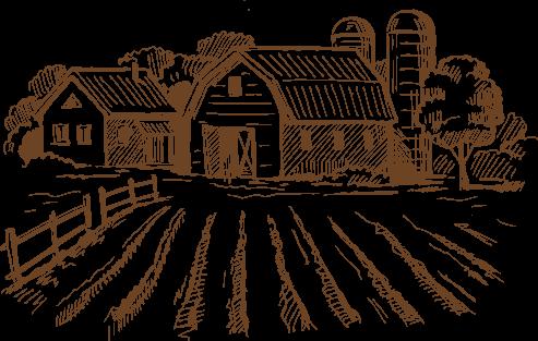 nuestra huerta de verdura ecologica zaragoza